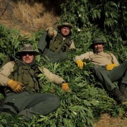 Pot Cops – National Geographic Channel